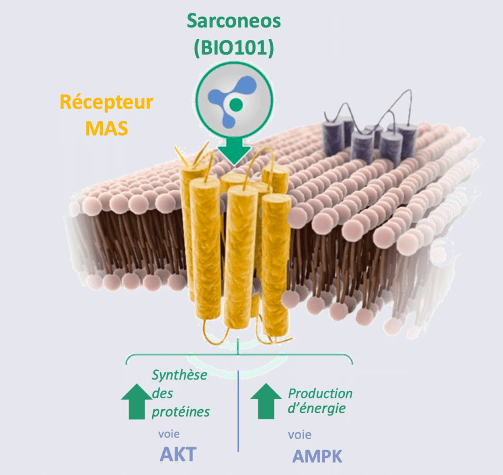 Sarconeos (BIO101) Récepteur MAS